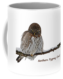 Northern Pygmy Owl 2 Coffee Mug