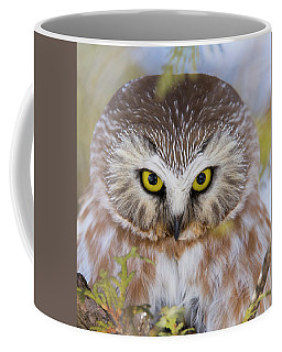 Coffee Mug featuring the photograph Northern Saw-whet Owl Portrait by Mircea Costina Photography