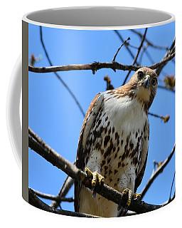 Not Polite To Stare Coffee Mug by Kathy Eickenberg