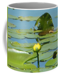 Nuphar Lutea Yellow Pond Coffee Mug