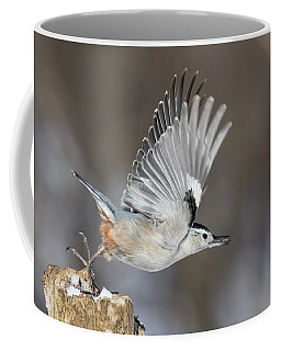 Coffee Mug featuring the photograph Nuthatch In Action by Mircea Costina Photography