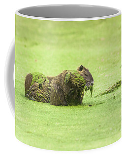 Coffee Mug featuring the photograph Nutria In A Pesto Sauce by Robert Frederick