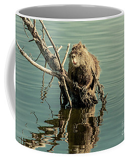 Coffee Mug featuring the photograph Nutria On Stick-up by Robert Frederick