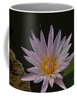 Nymphaea Pubescens Coffee Mug
