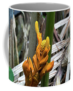 Nypa Fruticans Flowers Closeup Coffee Mug
