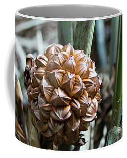 Nypa Fruticans Nuts Closeup Coffee Mug