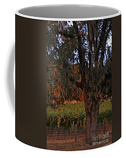Oak Tree And Vineyards In Knight's Valley Coffee Mug