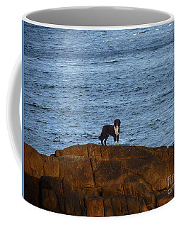 Ocean Dog Coffee Mug
