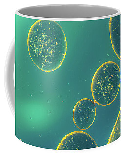 Coffee Mug featuring the photograph Oil And Water by The 3 Cats