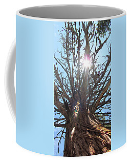 Old Juniper Coffee Mug