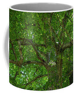 Old Linden Tree. Coffee Mug by Ulrich Burkhalter