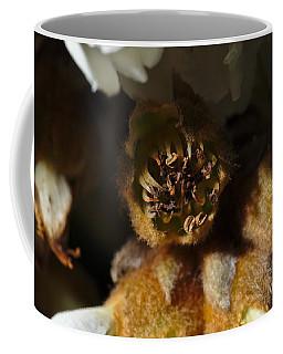 Old Loquat Tree Flower Coffee Mug