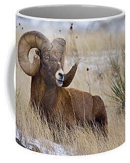 Coffee Mug featuring the photograph Old Man Bighorn by Rikk Flohr