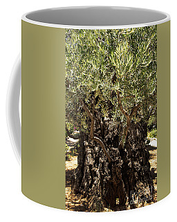 Coffee Mug featuring the photograph Olive Tree by Mae Wertz