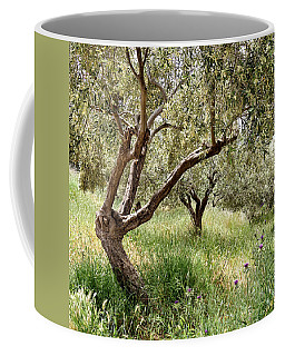 Olive Trees Coffee Mug by Shirley Mitchell