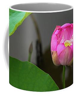 Opening Lotus Lily Coffee Mug