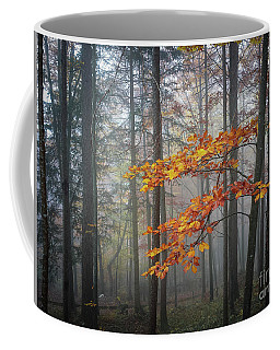 Coffee Mug featuring the photograph Orange And Grey by Elena Elisseeva