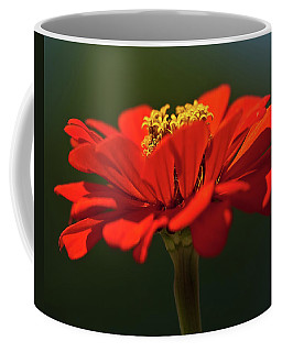 Coffee Mug featuring the photograph Orange Aster-a Bee's Eye View by Onyonet  Photo Studios