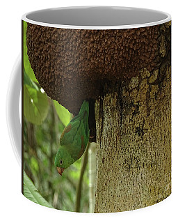 Orange -chinned Parakeet  On A Termite Mound Coffee Mug