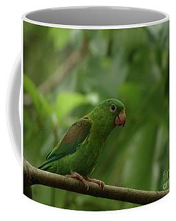 Orange-chinned Parakeet  Coffee Mug