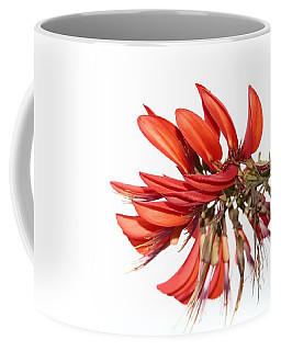 Coffee Mug featuring the photograph Orange Clover IIi by Stephen Mitchell