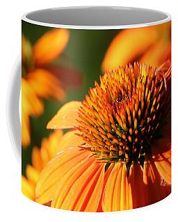 Orange Coneflower At First Light Coffee Mug
