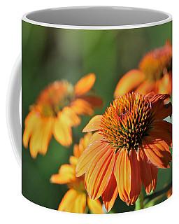 Orange Cone Flowers In Morning Light Coffee Mug