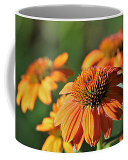 Coffee Mug featuring the photograph Orange Cone Flowers In Morning Light by Sheila Brown