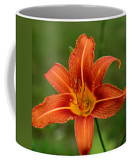 Orange Day Lily No.2 Coffee Mug