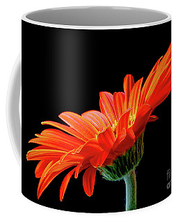 Orange Gerbera On Black Coffee Mug