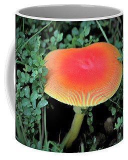 Coffee Mug featuring the photograph Orange Glow  by Sheila Brown