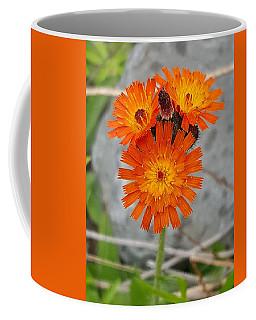 Orange Hawkweed Coffee Mug