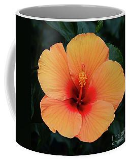 Coffee Mug featuring the photograph Orange Hibiscus by Cindy Manero