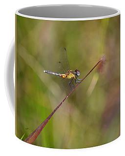 Orange Medowhawk - Dragonfly Coffee Mug