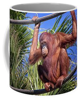 Orangutan On Ropes Coffee Mug by Stephanie Hayes