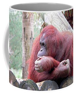 Orangutang Contemplating Coffee Mug