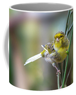 Orchard Oriole Coffee Mug