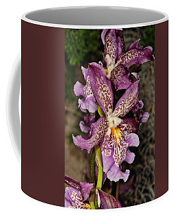 Orchid 347 Coffee Mug