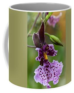 Orchid - Caucaea Rhodosticta Coffee Mug
