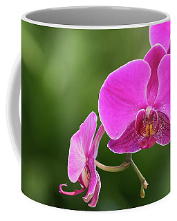 Orchid In Pink Coffee Mug