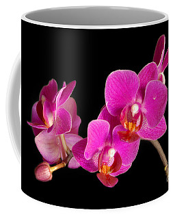 Coffee Mug featuring the photograph Orchids by Alana Ranney