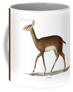 Coffee Mug featuring the drawing Oribi, A Small African Antelope by J D L Franz Wagner