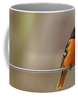 Oriole On The Line Coffee Mug