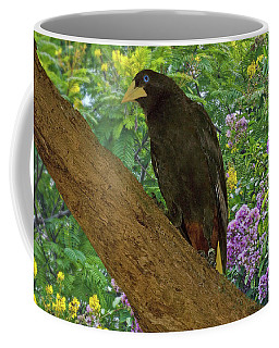Oropendola Bird On Limb With Floral Background Coffee Mug