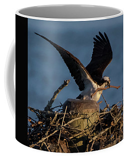 Osprey 2017 - 1 Coffee Mug