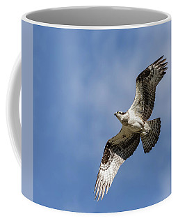 Coffee Mug featuring the photograph Osprey 2017-3 by Thomas Young