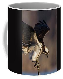 Osprey 2017 -4 Coffee Mug