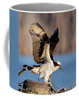 Osprey 2017 - 5 Coffee Mug