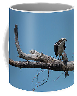 Osprey And Fish Coffee Mug