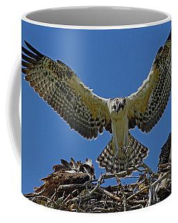 Osprey Chick Ready To Fledge Coffee Mug by Larry Nieland